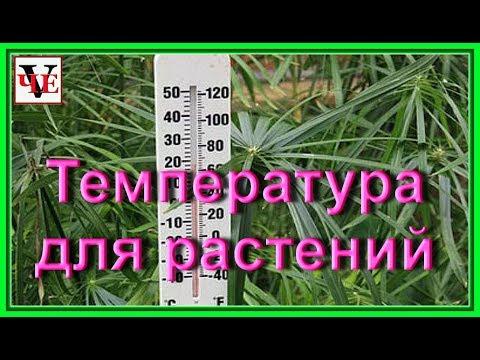 Температура для выращивания комнатных растений.