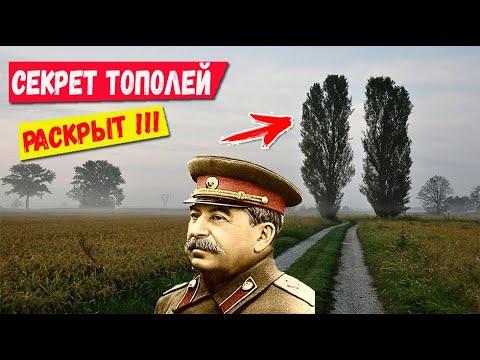 Зачем в СССР везде сажали тополя? Секрет раскрыт!