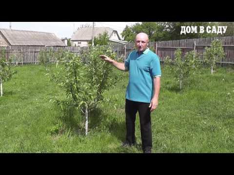 Как ухаживать за саженцами яблони - садовник с 20-им стажем