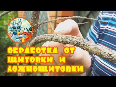 Александр Петров. Обработка от яблонной запятовидной щитовки и акациевой ложнощитовки