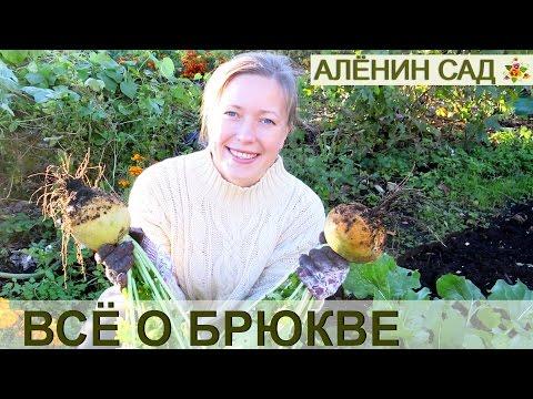Как вырастить БРЮКВУ / Выращивание брюквы