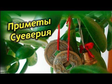 Денежное Дерево – Приметы, Суеверия и Магические свойства растения.