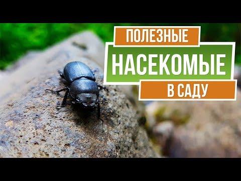 Они помогут вам в саду ✔️ Полезные насекомые на даче