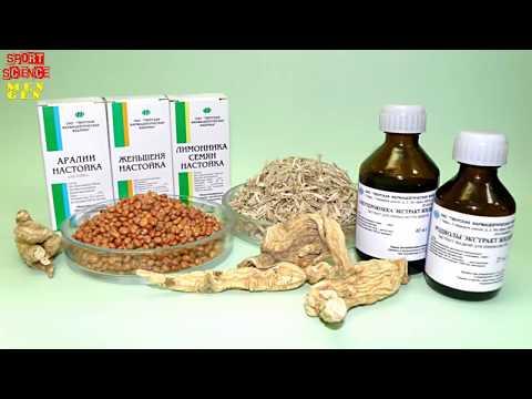 Аралия маньчжурская лечебные свойства и противопоказания. Аралия маньчжурская цена, купить