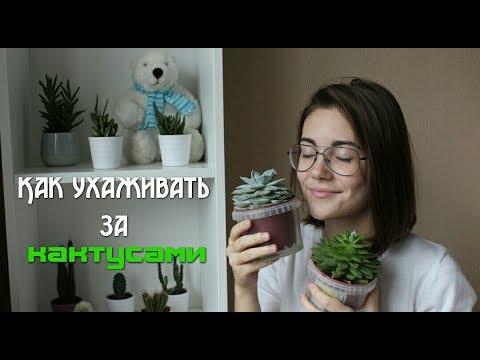 Как ухаживать за кактусами // Как поливать кактусы? // ВСЕ кактусы цветут