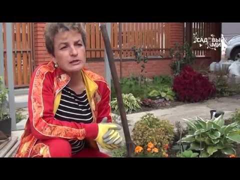 """Цветы с весны до осени Прекрасная Гейхера. Сайт """"Садовый мир"""""""