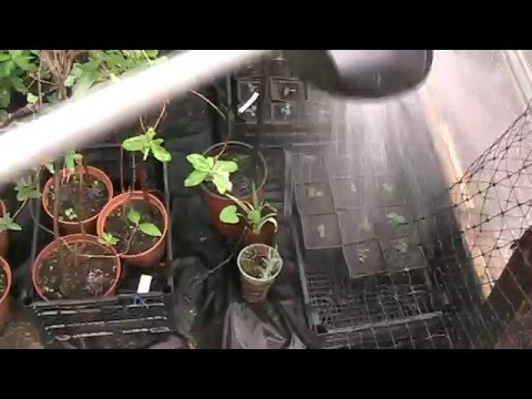Посев семян 2. Ирга. Пикировка всходов.