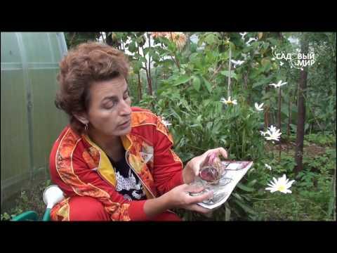 """Осенняя посадка лилий.Сайт """"Садовый мир"""""""