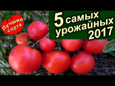 Самые Урожайные Семена Томатов 2017 (лучшие сорта томатов).