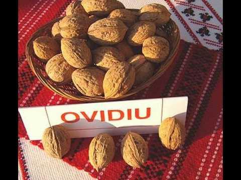 Молдавские сорта грецкого ореха.