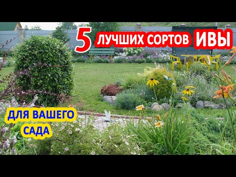 ИВА в саду. 5 лучших видов ДЕКОРАТИВНОЙ ИВЫ: Козья, Хакуро - Нишики, ива Нана, Извилистая, Плакучая.