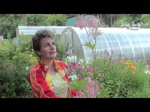 """Неприхотливые цветы для сада Лабазник. Сайт """"Садовый мир"""""""