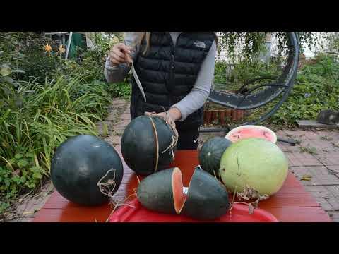 Сорта арбузов: описание и дегустация