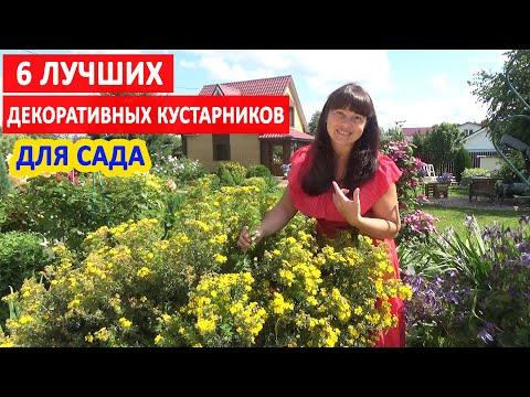 6 ЛУЧШИХ ДЕКОРАТИВНЫХ КУСТАРНИКОВ, цветущих все лето!
