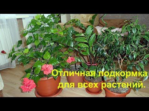 Мои цветы и супер подкормка для всех комнатных растений.