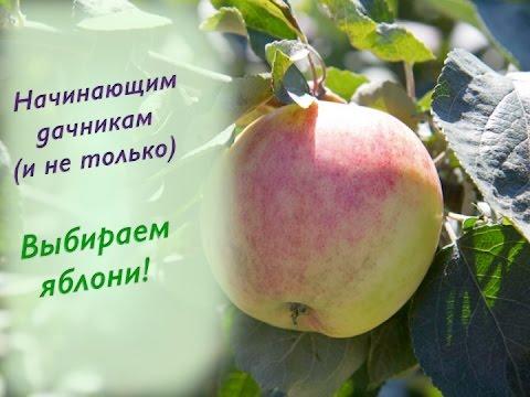 10.Выбираем яблоню. Лучшие сорта яблонь: Мельба, Мантет и другие.
