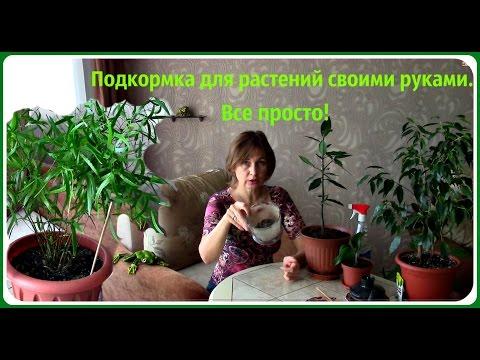 Удобрения для комнатных растений своими руками.