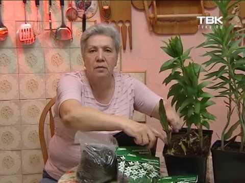 Советы тети Тани Ацидантера