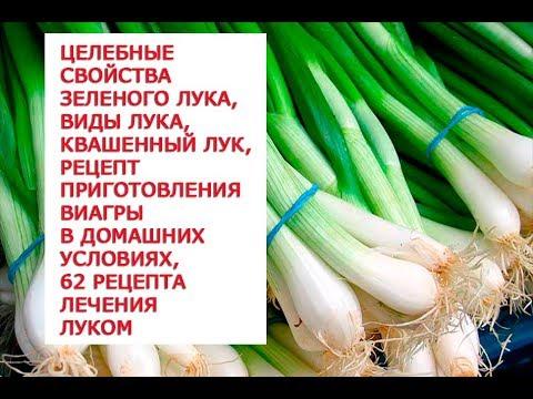 Целебные свойства зеленого лука, виды лука, квашенный лук, рецепт приготовления виагры в домашних ус