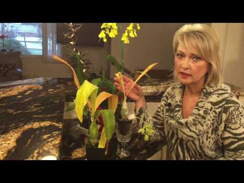 Орхидея катасетум. Немного об уходе. Цветение орхидеи. Полив . Зимний отдых для катасетума.
