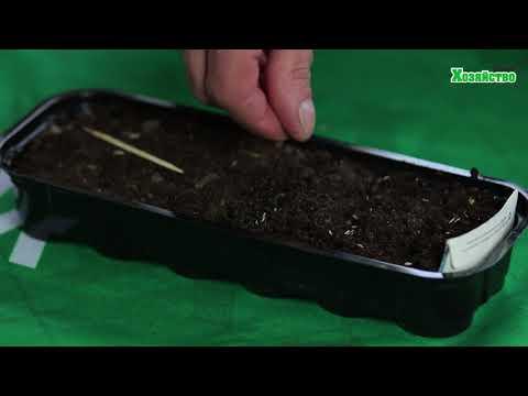 Мы сеем салат на рассаду. Получим на 2 недели раньше