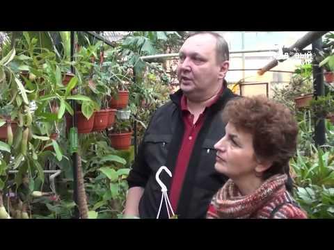 """Как вырастить растения хищники дома.Непентес. Сайт """"Садовый мир"""""""