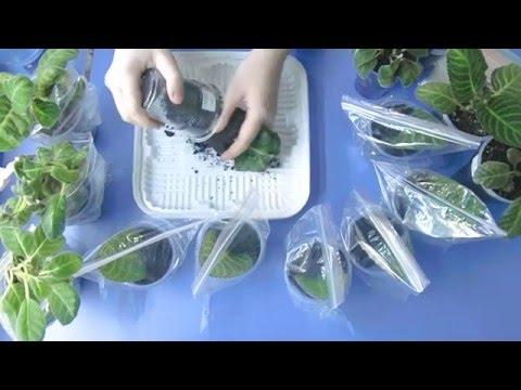 🌼Глоксинии, посадка листьев, результаты моего выращивания ! 🌼🌱How to grow gloxinia part №21