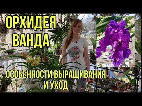 Орхидея Ванда Vanda в стеклянной вазе. Уход в домашних условиях