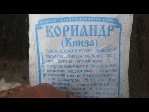 СЕЕМ КОРИАНДР - КИНЗУ Видеоурок Ольги Черновой 13 апреля 2017 года