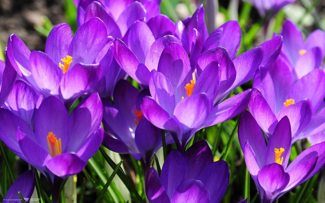 Фото цветов высокого разрешения картинки и фотографии
