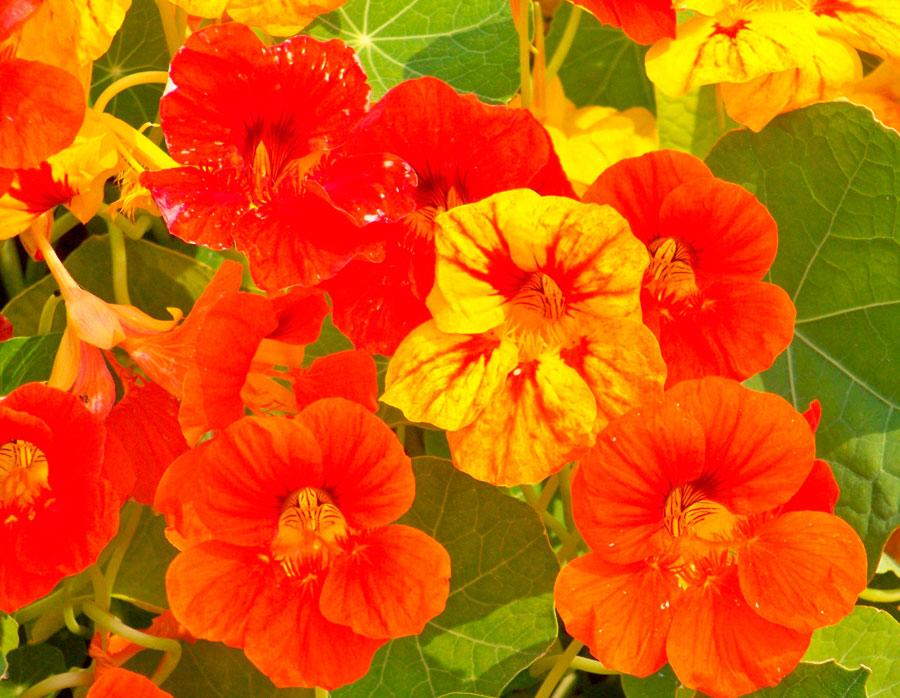 Садовые теневые цветы