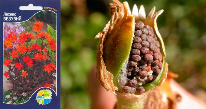 Выращиваем из семян