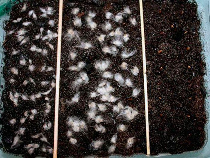 Как подготовить семена