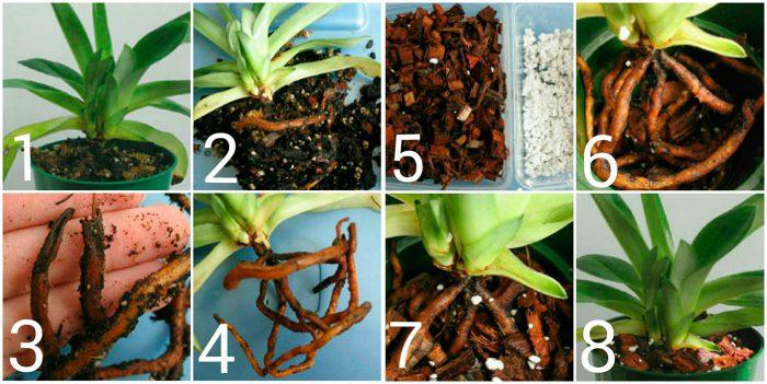 Подготовка почвы при пересадке