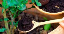Натуральные удобрения для комнатных растений