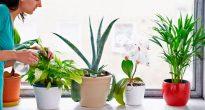 домашние лекарственные растения