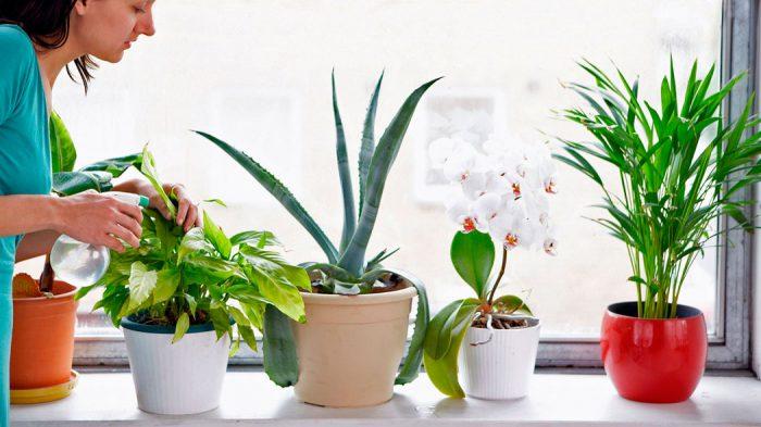 Лечебные свойства домашних цветов фото