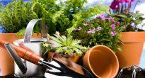 натуральные подкормки для комнатных растений