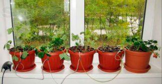 Гидропоника в домашних условиях