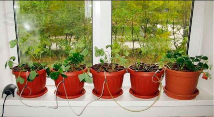 Гидропоника для домашних цветов