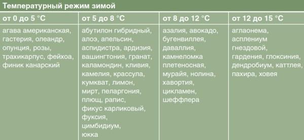 Температура зимой и период покоя