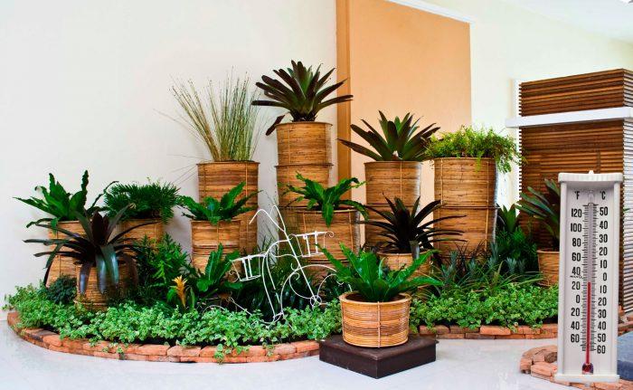 Температура для комнатных растений
