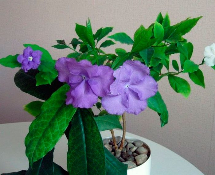 Место для цветка
