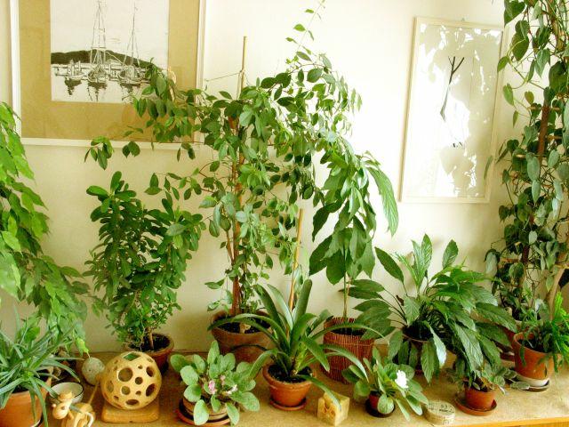 Влияние температуры на растение