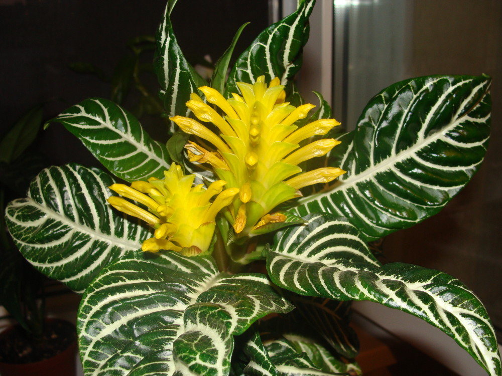 Енциклопедия  цветя и растения  Начало