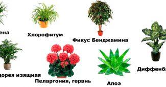 комнатные растения очищающие воздух