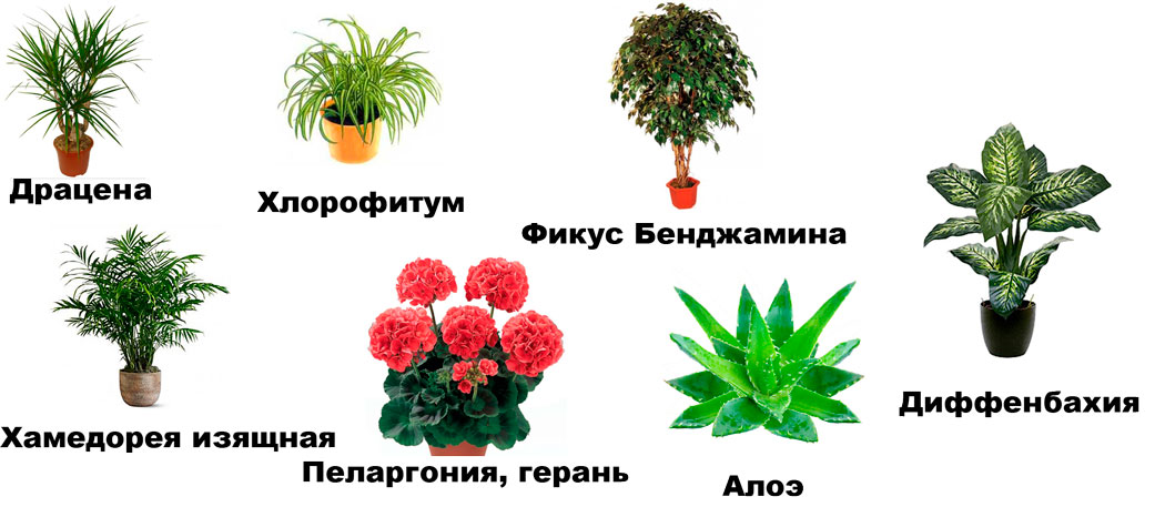 Картинки на комнатные растения и их названия 13