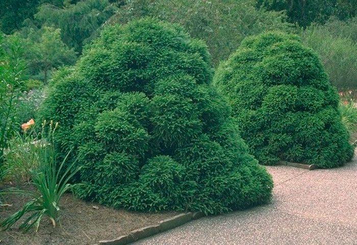 Садовые формы