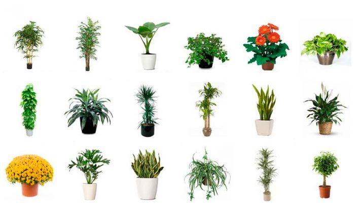 15 комнатных растений очищающих воздух