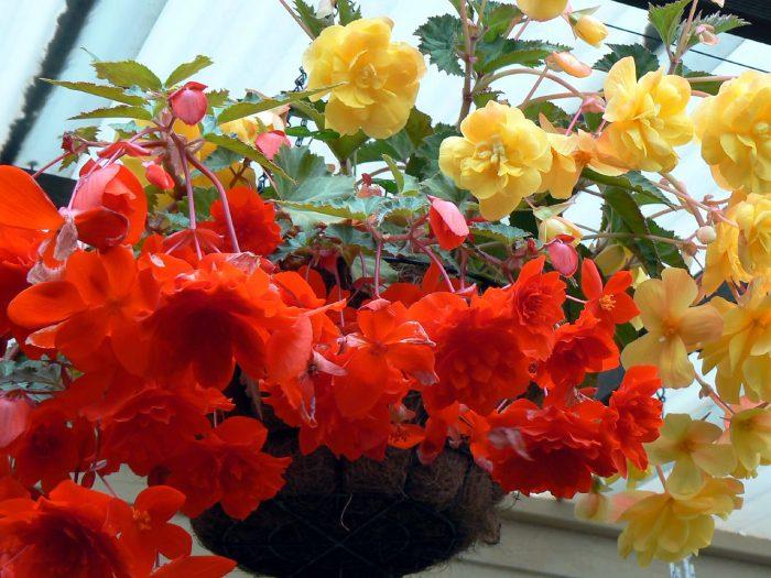 Трудности при выращивании и причины